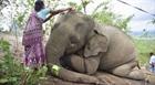 Sét đánh chết 18 con voi