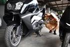 Bắt giữ 2 xe mô tô đắt tiền không rõ nguồn gốc trên tàu hỏa