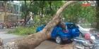 Tiềm ẩn tai nạn giao thông do cây đổ mùa mưa bão