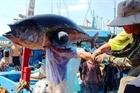 Kết quả thanh tra của EC về thủy sản Việt Nam