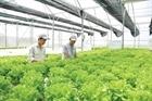 Gỡ nút thắt sản xuất rau an toàn tại Hà Nội