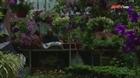 Xu hướng trồng rau tại nhà mùa dịch Covid-19