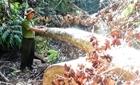 Công an vào cuộc điều tra vụ phá rừng Thượng Sơn