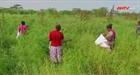 Người dân Kenya với nỗi lo thảm họa sinh thái