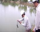 Tìm nguyên nhân cá chết hàng loạt tại đập Hố Chuối