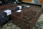 Bắt vụ nuôi, nhốt hơn nửa tấn tê tê ở Hà Tĩnh
