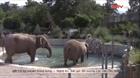 Macedonia: Nhân viên sở thú giúp voi hạ nhiệt trong thời tiết nắng nóng