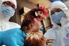 Trung Quốc xác nhận ca nhiễm cúm H5N6 đầu tiên ở người