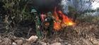 Cháy rừng tại Nghệ An, Hà Tĩnh