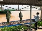 Bắt hơn 6 tấn heo nhập lậu từ Campuchia