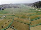 Nông dân Lý Sơn giăng lưới bảo vệ cây tỏi