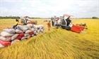 Hỗ trợ doanh nghiệp tiếp cận nguồn vốn thu mua thóc, gạo