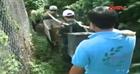 Quảng Bình quan tâm cứu hộ và bảo tồn động vật hoang dã