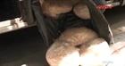 Kiểm tra xe chở khách phát hiện thực phẩm bẩn