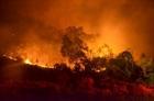 Điều tra nguyên nhân vụ cháy rừng phòng hộ Nam Sơn