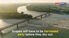 Nông dân Italy thiệt hại hơn 1 tỷ Euro do hạn hán