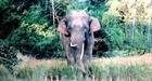 Có hàng rào điện, voi rừng vẫn xuất hiện