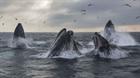 Cá voi xám hiếm gặp xuất hiện tại vùng biển ở Mỹ trên đường di cư