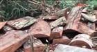 Chủ doanh nghiệp cầm đầu phá rừng quy mô lớn