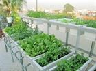 Syria: Tự trồng rau trên sân thượng mùa dịch Covid-19