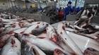 Cá tra Việt Nam vẫn kẹt thị trường xuất khẩu