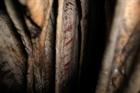 Nhiều khám phá kinh ngạc từ những bức tranh trong hang động