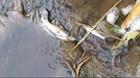Cá chết bất thường tại dòng suối ở huyện Buôn Đôn