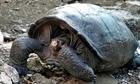 Phát hiện rùa khổng lồ đã tuyệt chủng tại Ecuador