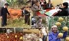Cần đột phá trong chương trình giảm nghèo, xây dựng nông thôn mới
