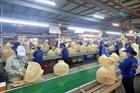 Hà Nội nỗ lực khôi phục sản xuất ở ''vùng xanh''