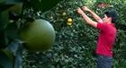 Tỷ phú nông dân trẻ trên đất Cao Phong
