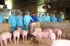 8 phòng xét nghiệm miễn phí dịch tả lợn châu Phi