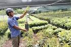 Người dân đua nhau trồng giống sầu riêng ngoại chưa thử nghiệm