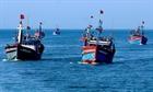Kiểm soát tàu cá hoạt động khai thác hải sản ngoài tỉnh