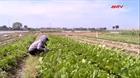 Tìm hướng tiêu thụ cho vùng trồng rau lớn nhất Hà Nội