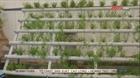 Phương pháp trồng trọt tiết kiệm nước của người tị nạn Syria