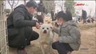 Câu chuyện cứu động vật bị bỏ rơi ở Vũ Hán, Trung Quốc
