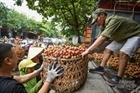 Từ thu hoạch đến tiêu thụ nông sản giúp bà con vùng dịch