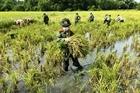 Công an xuống đồng giúp dân gặt lúa chạy bão