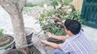Nạn trộm cắp cây cảnh ở Bình Định