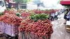 Xuất khẩu vải thiều sang Trung Quốc đạt 42 triệu USD