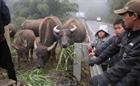 Tăng cường phòng chống rét cho vật nuôi