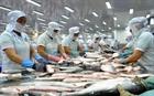 Thủy sản được mùa, giá cá tra tăng cao