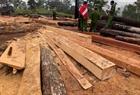 Khởi tố 9 đối tượng trong vụ phá rừng quy mô lớn