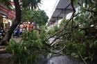 Hà Nội: Cây đổ hàng loạt, 1 người chết
