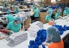 Xuất khẩu hơn 1,3 tỷ chiếc khẩu trang y tế