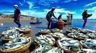 Tổ cộng đồng bảo vệ nguồn lợi thủy sản ở Đà Nẵng