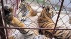 Tiêu thụ động vật hoang dã bất chấp nhiều hiểm nguy
