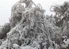 Yên Bái thiệt hại do băng tuyết