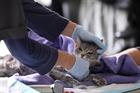 Ấn Độ: Phòng khám thú y chật cứng khi chủ nhiễm Covid-19